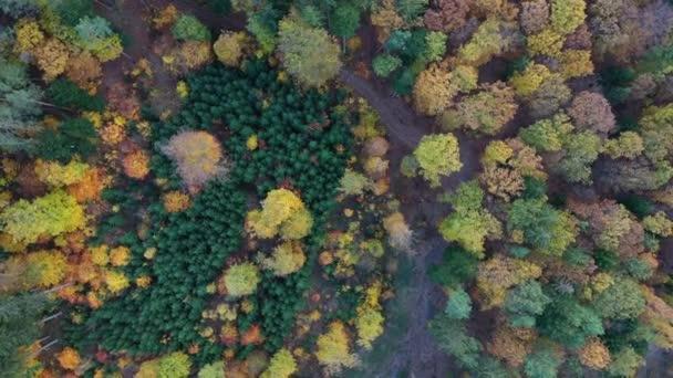 Légi felülről lefelé kilátás őszi erdő zöld és sárga fák. Vegyes lombhullató és tűlevelű erdő. Őszi erdő fentről. Színes erdei légi kilátás. Scenic sárga fák erdős.