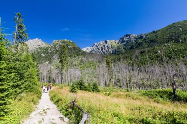 Nature along the hiking route to the Teryho Chata in the High Tatras