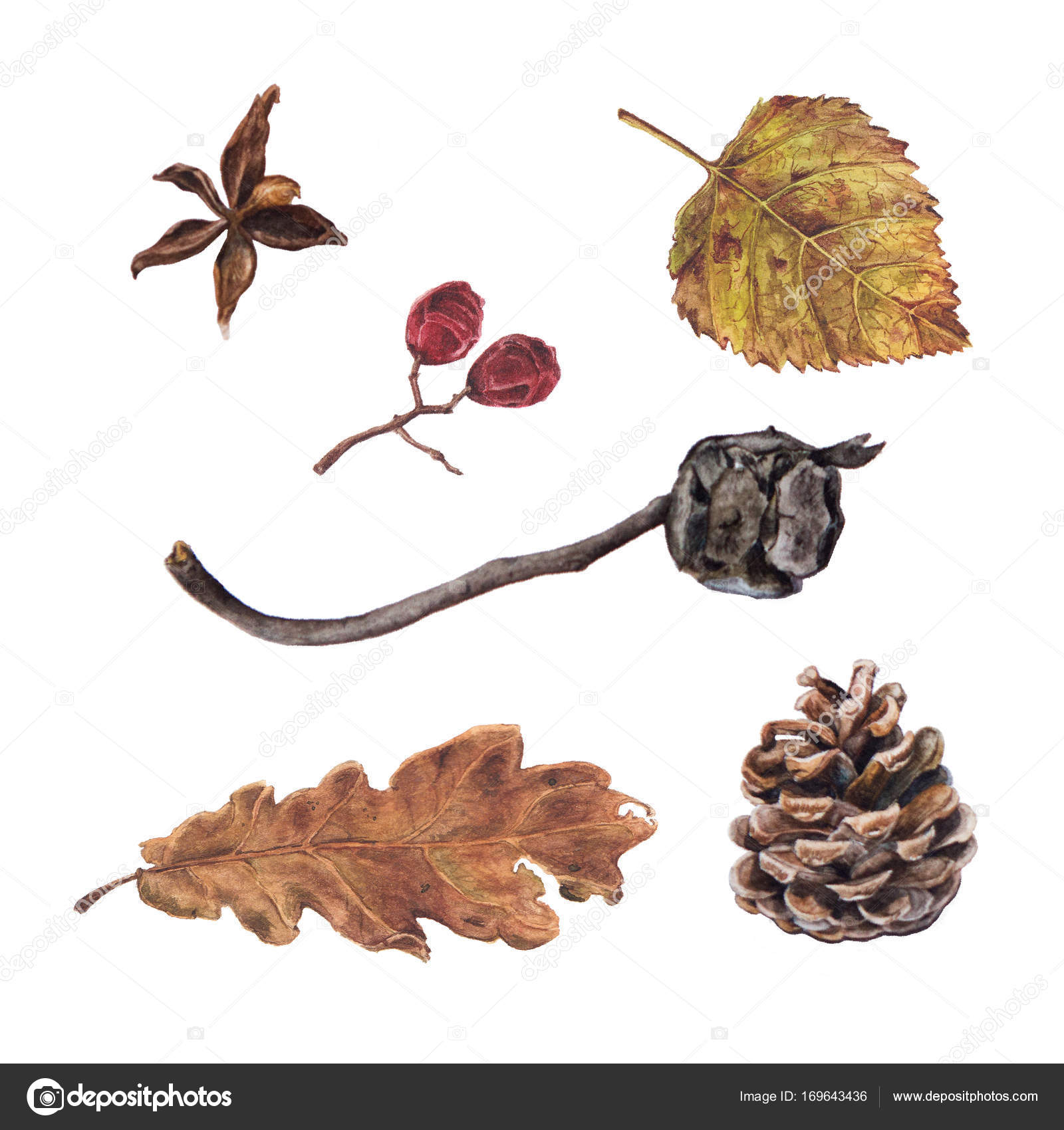 Pinien und Zypressen Kegel, Herbst Blätter und Beeren — Stockfoto ...