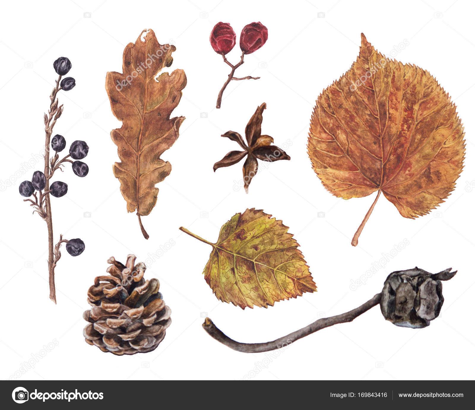 Herbst, Herbstlaub, Beeren, Pinien, Zypressen Kegel — Stockfoto ...
