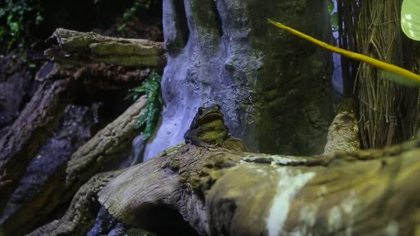 schönen grüner Frosch Nahaufnahme