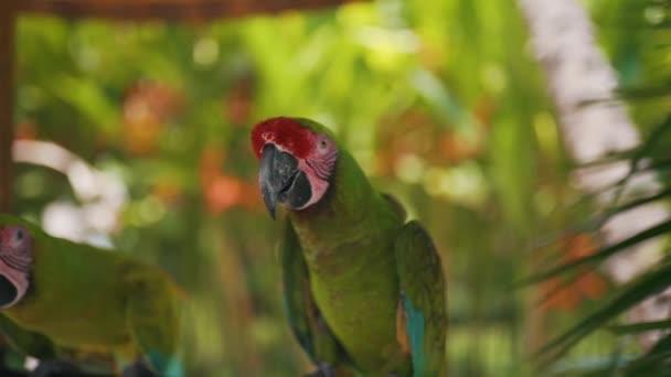 zelený papoušek sedí na větvi