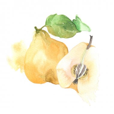 Fruits quince  in watercolor style. Isolated.