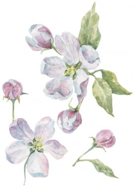 Watercolor flowers and leaves for design