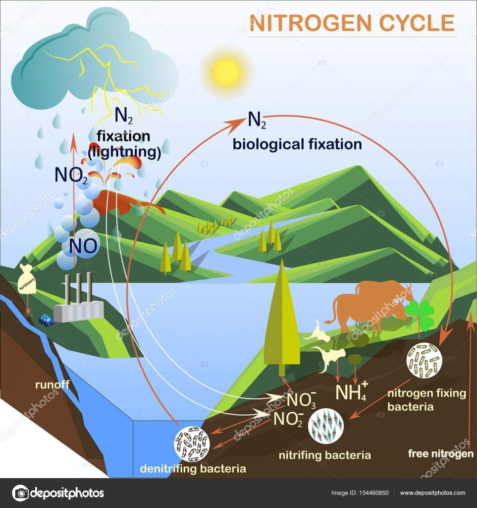 Scheme of the nitrogen cycle flats design vector illustration scheme of the nitrogen cycle flats design vector illustration stock vector pooptronica Choice Image