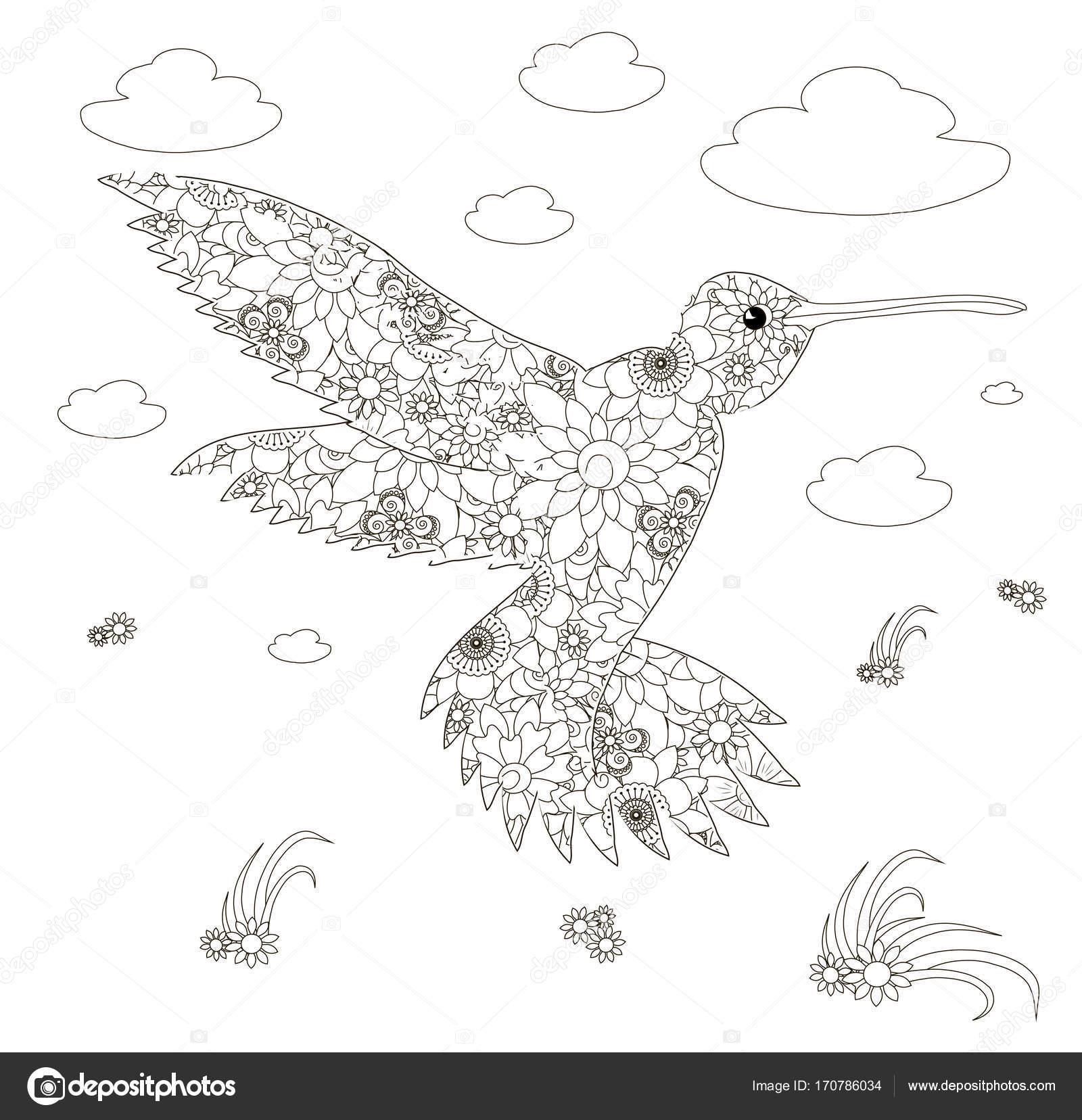 Monochrome Kolibris Blumen Malvorlagen Antistress Lager Vektor