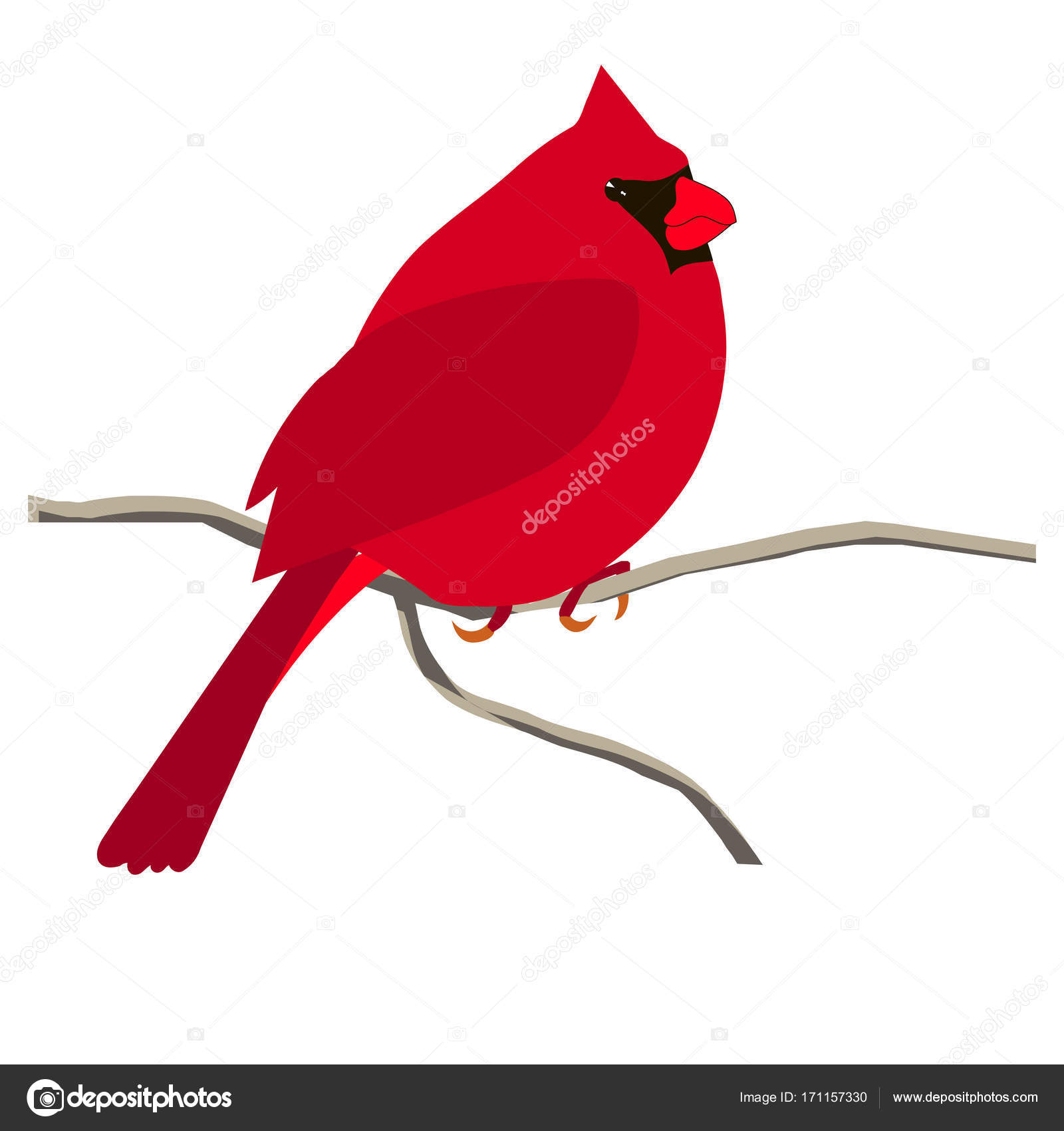 Mano dibujado colorido pájaro cardenal rojo, flor de hibisco para ...