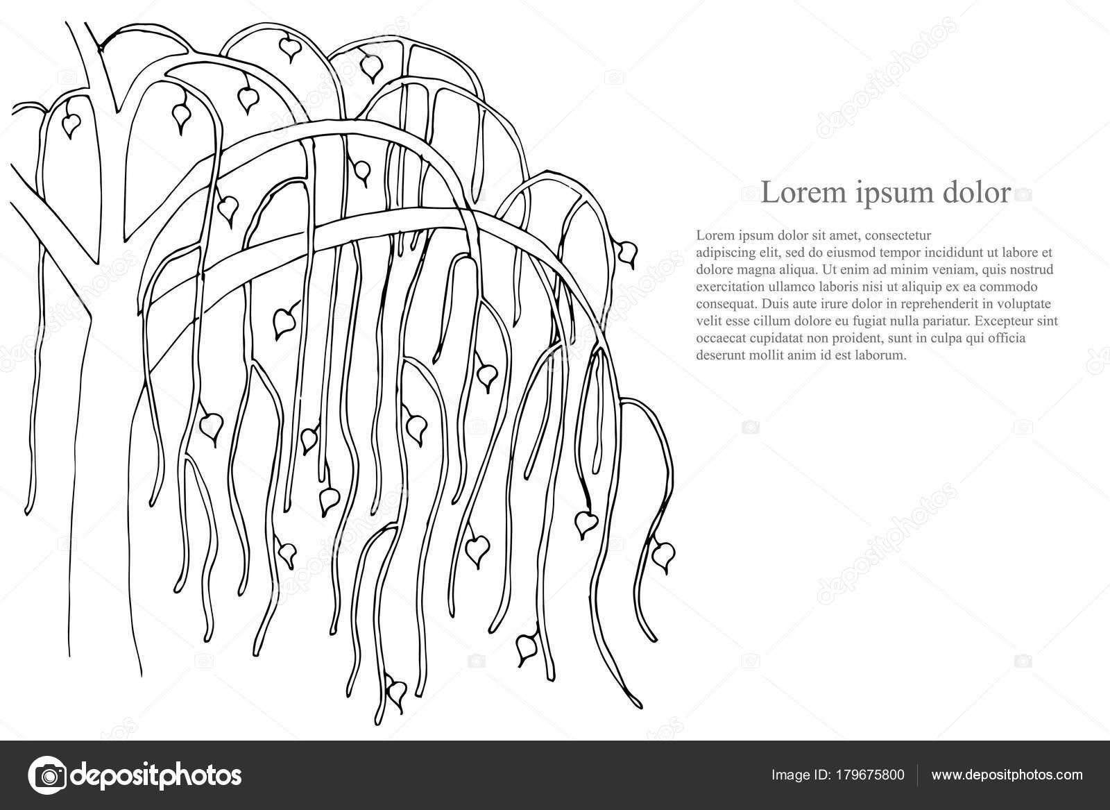 Romanticke Pozadi Strom Lorem Ipsum Cerne Bile Rucne Kreslenou