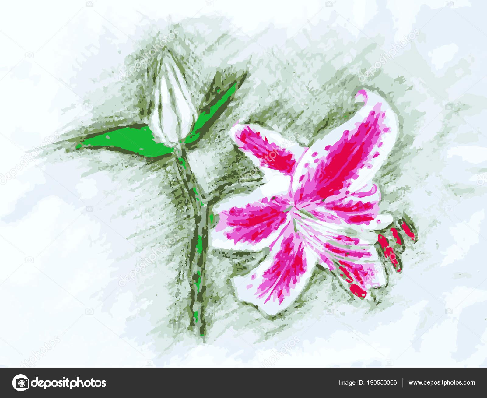 Illustrazione Di Lilium Colorati Matita Colorata Disegno Della