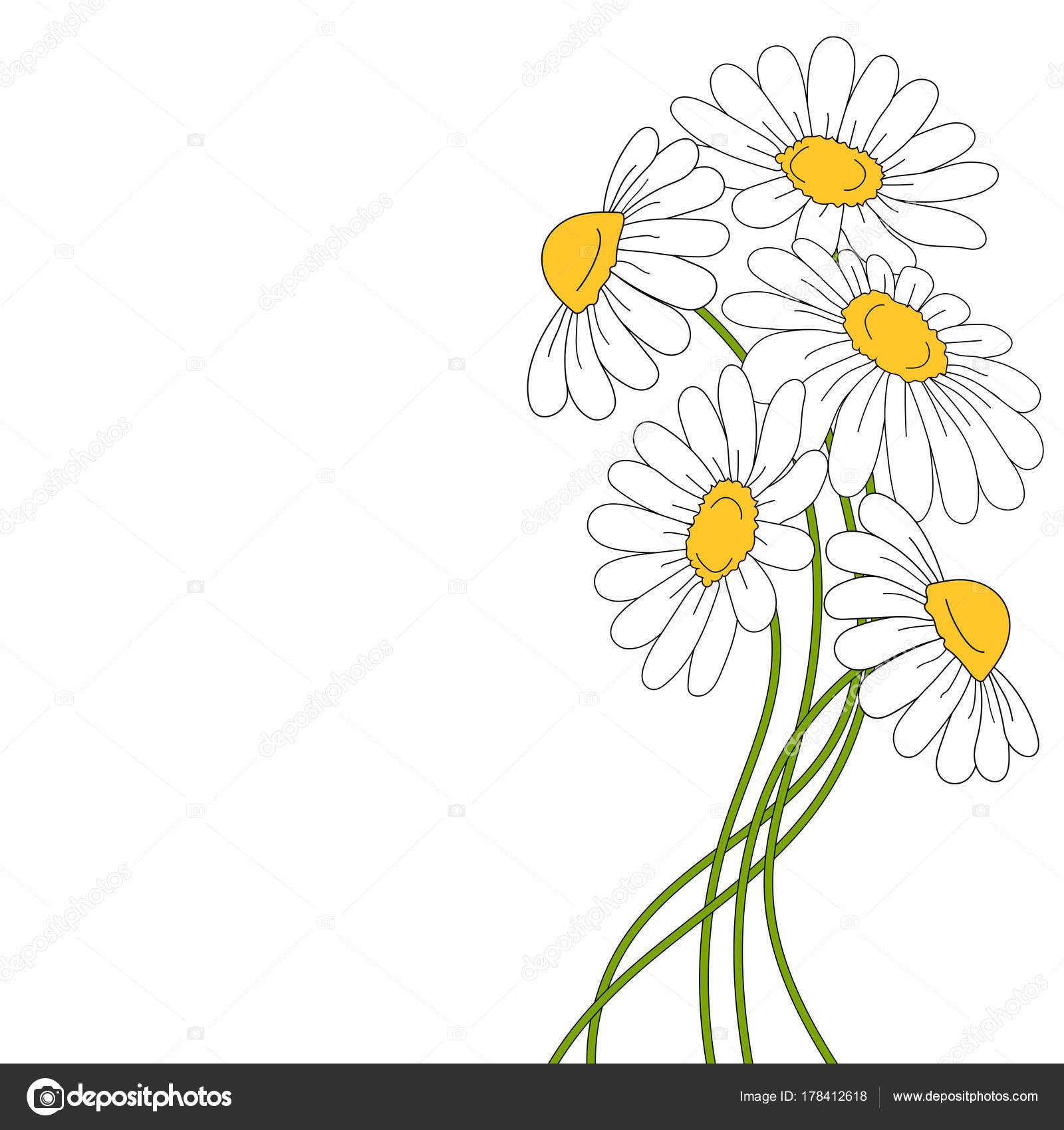 Beautiful Daisies On White Background Stock Vector C Debopre V