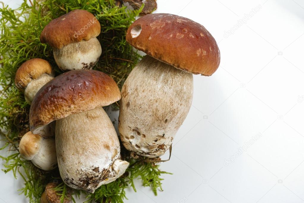 Come cucinare i funghi freschi alla perfezione - inNaturale