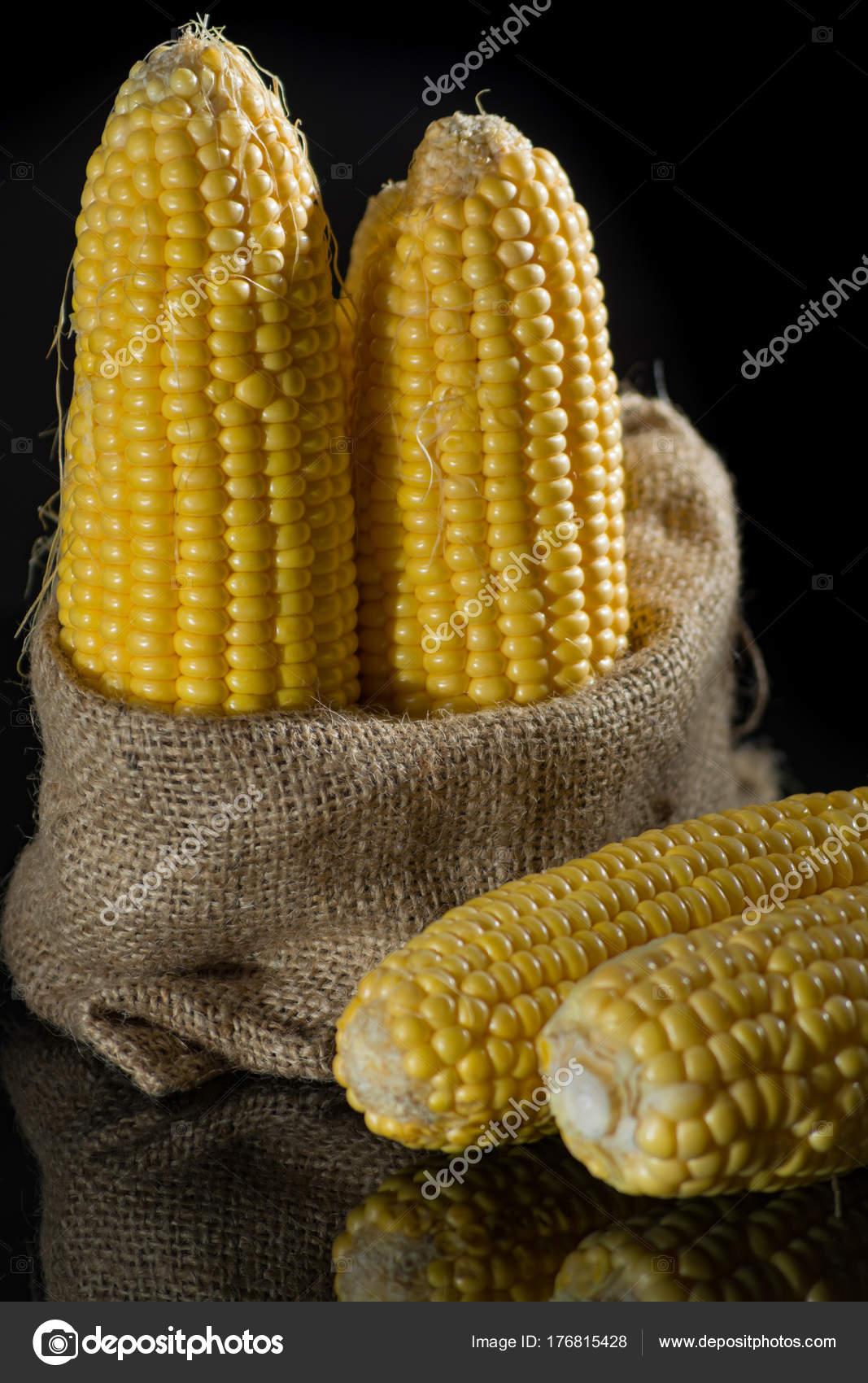 Raw sweet corn, yellow ripe corn ears — Stock Photo © foto