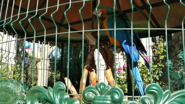 Barevné modré a žluté papoušek papoušek. Modrá zlatá papoušek papoušek. Ara ararauna