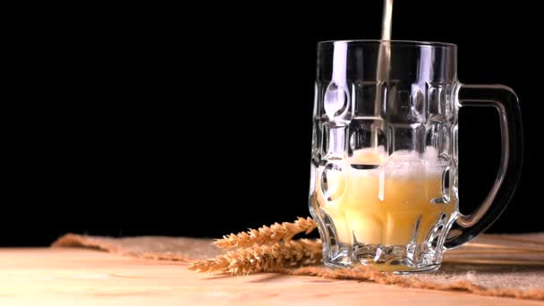 Pivo se sype shora do skla. Černé pozadí. Uši z pšenice.