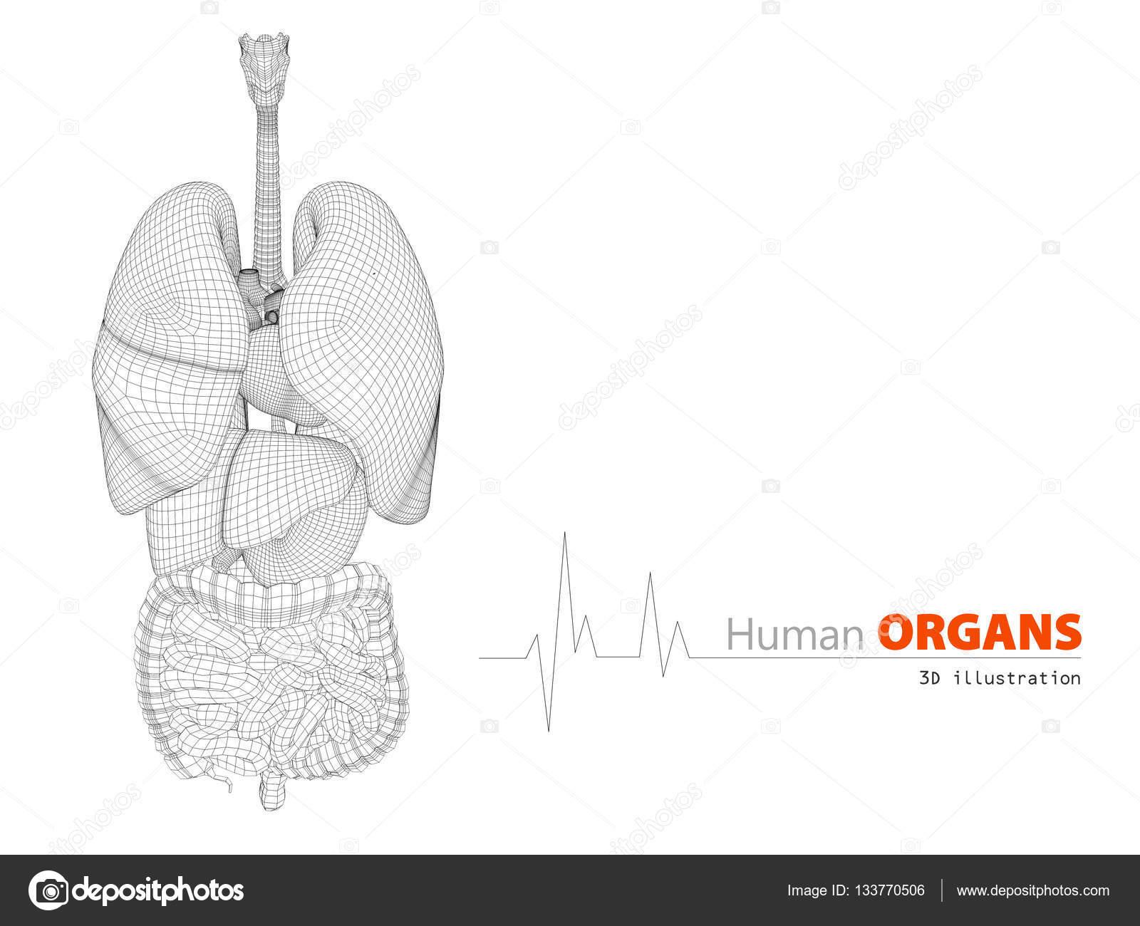 Anatomie des menschlichen Körpers 3d Illustration zeigt — Stockfoto ...
