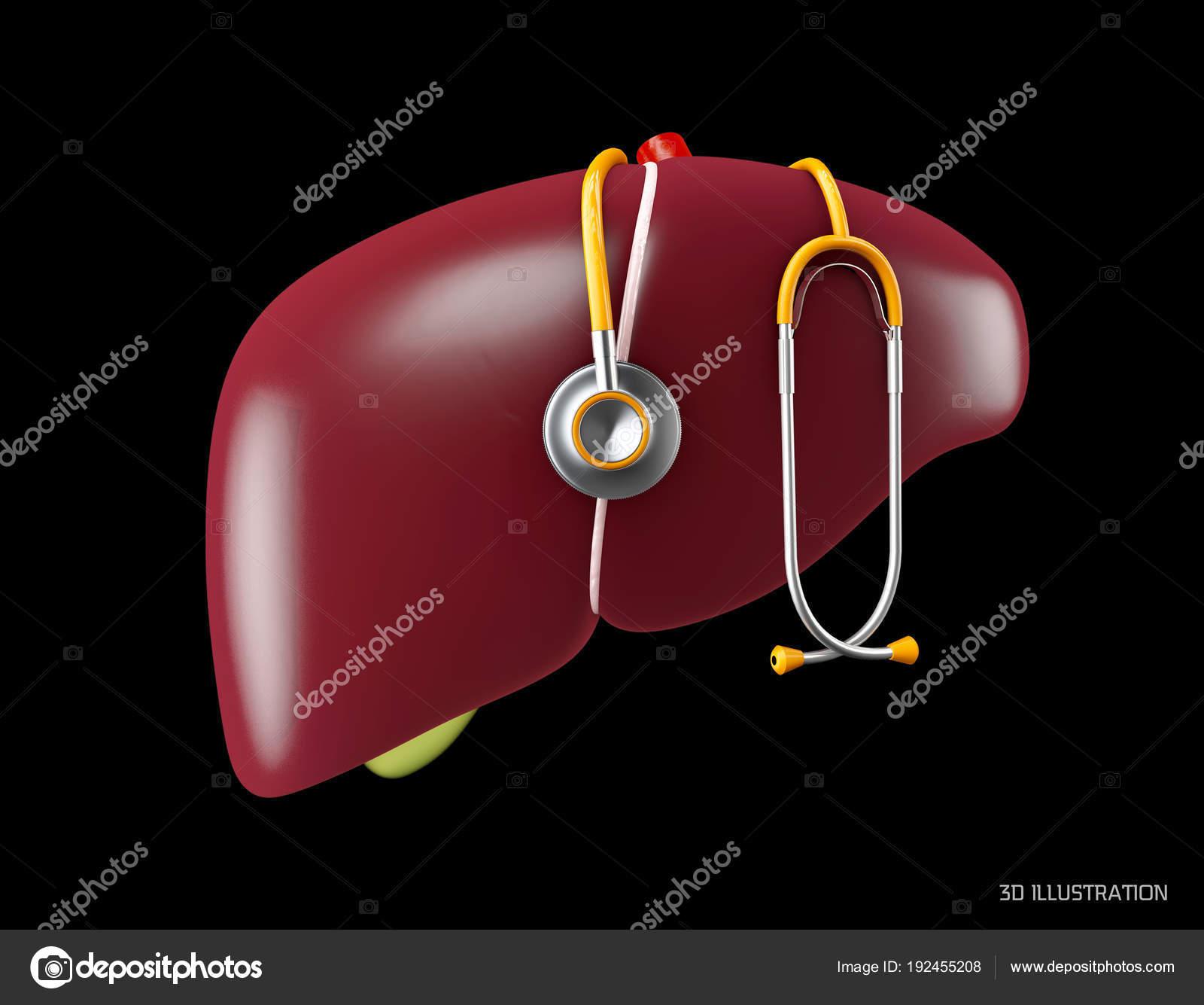 Anatomie Leber. Menschliche Organe symbol.3d abbildung isoliert auf ...