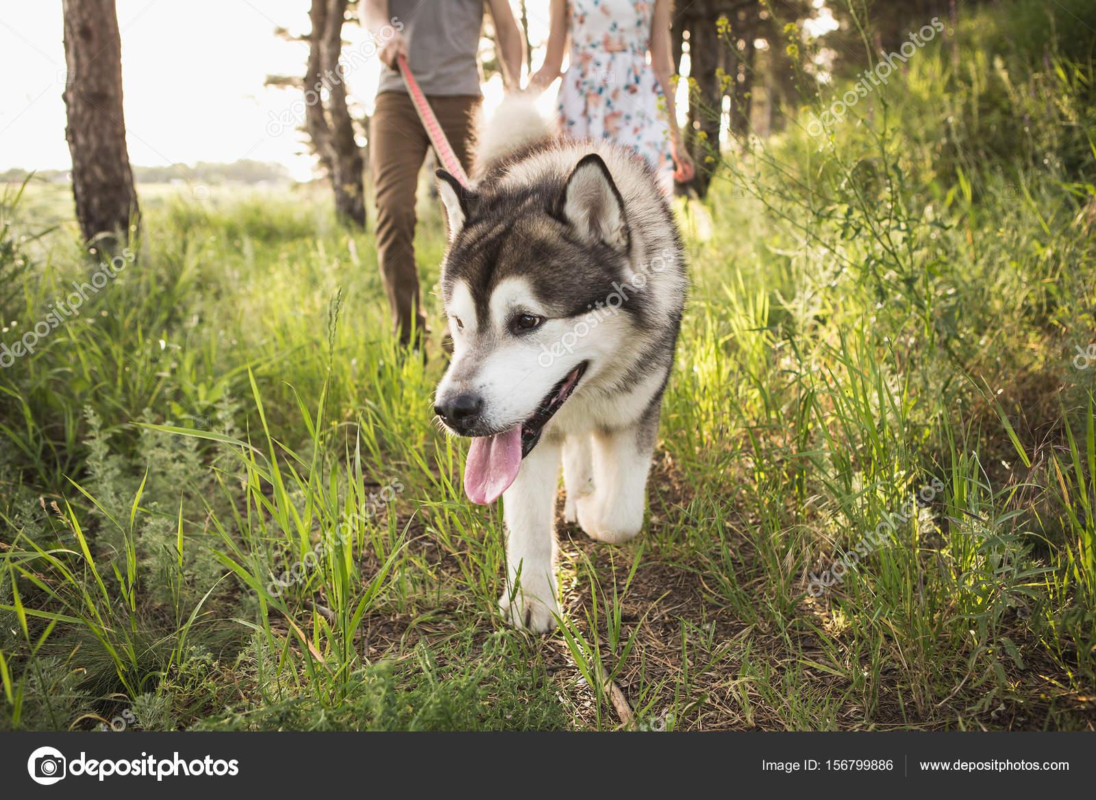 couple with a dog — stock photo © scharfsinn #156799886