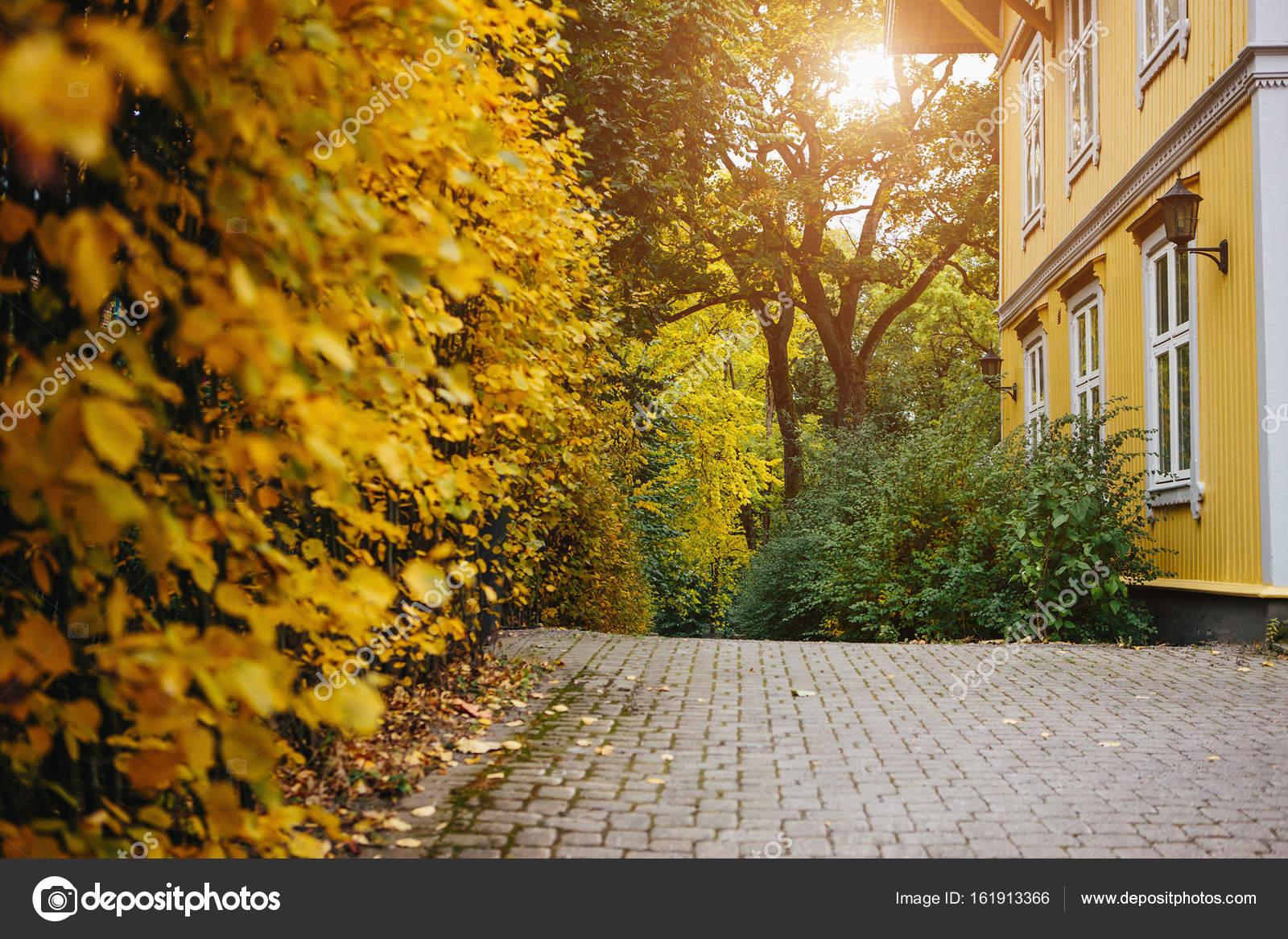 Wiersz Jesień Krzewów Na Ulicy Zdjęcie Stockowe