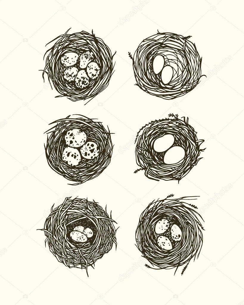 Ilustración de dibujado a mano nidos — Vector de stock © Ezhevica ...