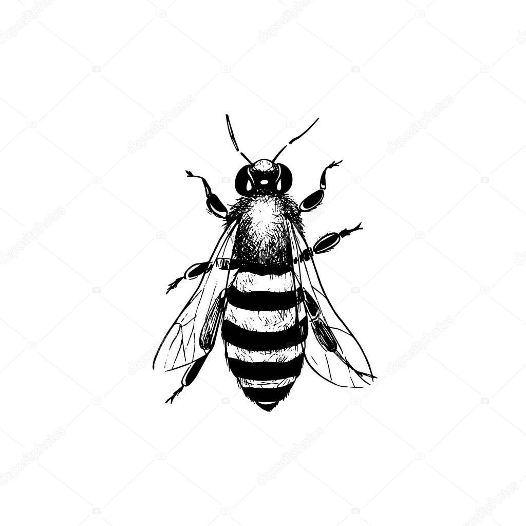 Vintage bee illustration