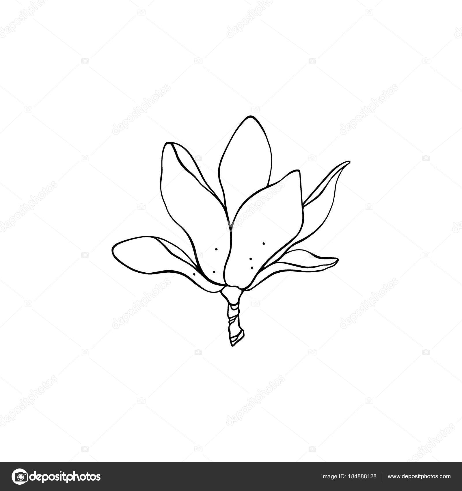 Hand drawn magnolia stock vector ezhevica 184888128 vector illustration of hand drawn magnolia flower beautiful floral design elements ink drawing logo template vector by ezhevica maxwellsz