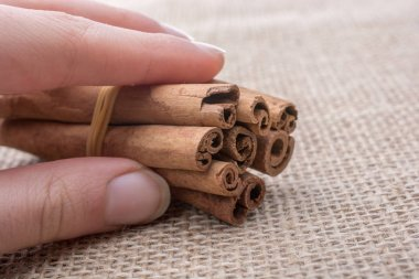 Cinnamon sticks  placed on a canvas