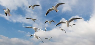 Pigeons fly in sky over the sea in Istanbul in  the urban environment