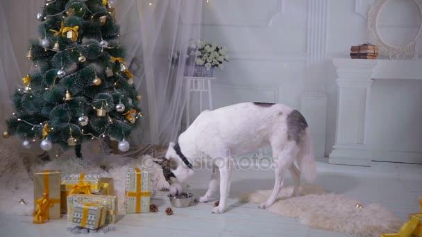 Hund Trinkwasser, leiden unter einem Kater nach dem Neujahrsfest.