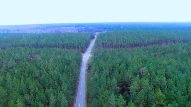Sűrű erdő, mocsár és nagyfeszültségű távvezetékek. Top légifelvételek. Villamos energia megy át a sűrű, nehéz területek.