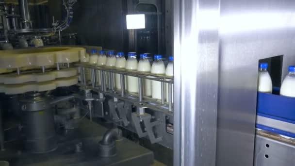 Taze Süt ürünleri şişe üzerinde Bir Konveyör Taşıma Süt ürünleri