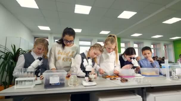 Základní škola biologie. Děti studium biologie, chemie ve školní laboratoři