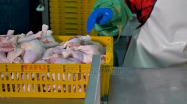 Workers hands remove chicken legs from bulk basket into individual packages.