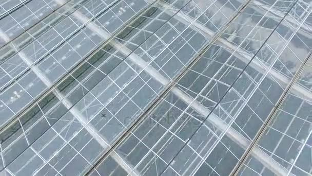 Agriculture industry concept. Drone fly over the greenhouses. Aerial shot in 4K.