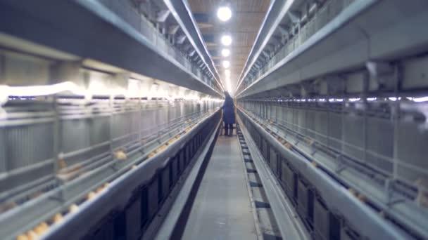 Vzdálený pohled baterie zemědělskému pracovníkovi chůzi a kontrola malá kuřata
