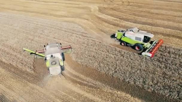 Threshing machines are harvesting rye in the field