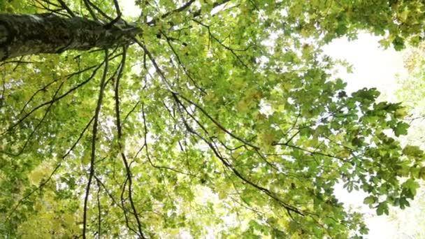Strom, patrné z níže v parku Foreste Casentinesi Toskánsko, Itálie.