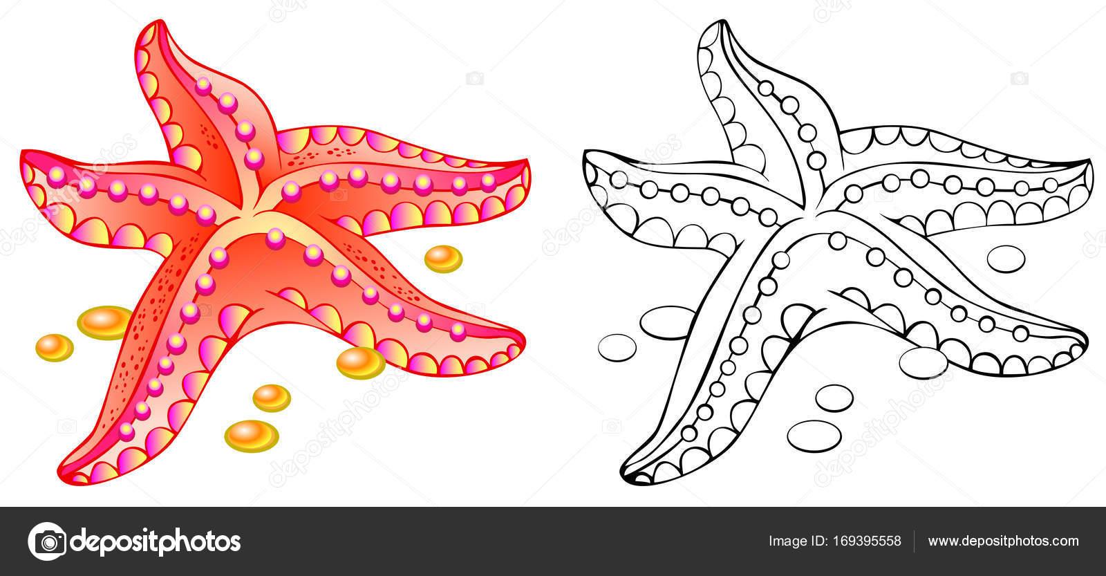 Colores y blanco y negro patrón de estrella de mar — Vector de stock ...