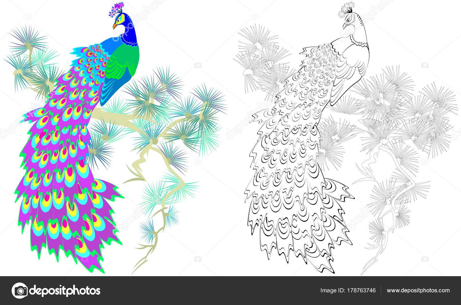 Animado: pavo real para colorear | Patrón Colores Blanco Negro Para ...