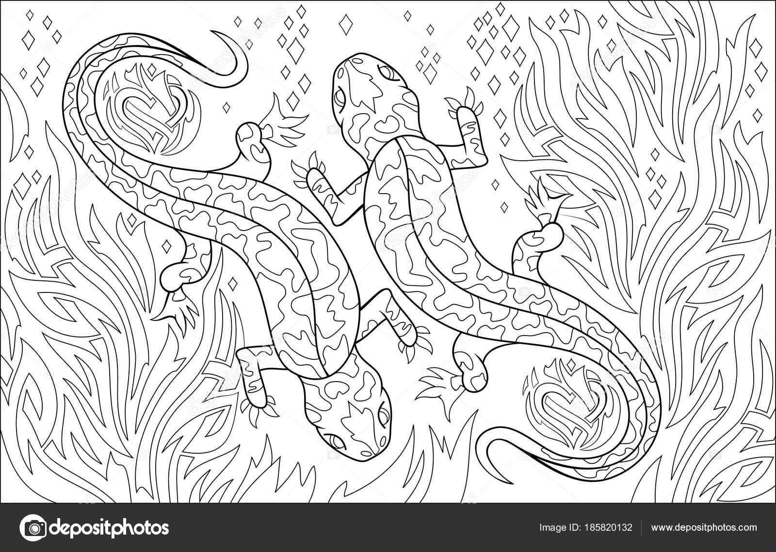 Página Para Colorear Blanco Negro Dibujo Salamandras Pareja Hoja ...
