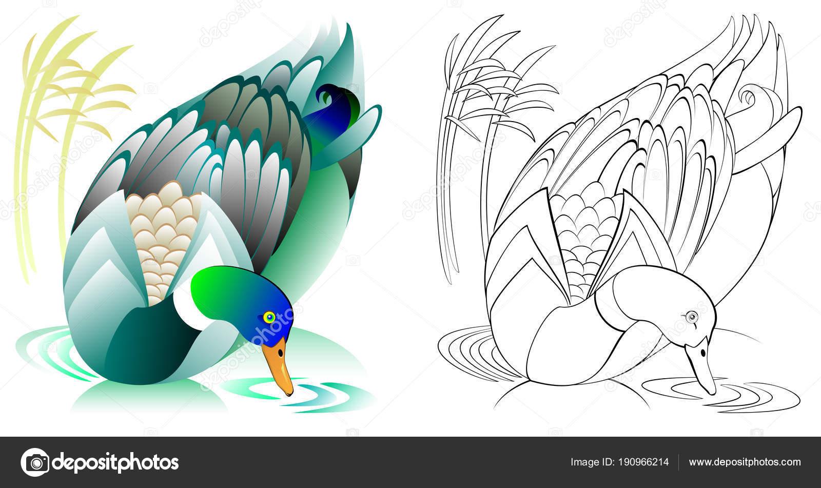 Bunt Und Schwarz Weiß Muster Zum Ausmalen Illustration Der Ente ...