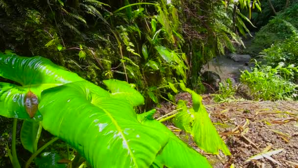 Green tropical plants in the rain. Tropical leaves closeup under falling raindrops in slow motion