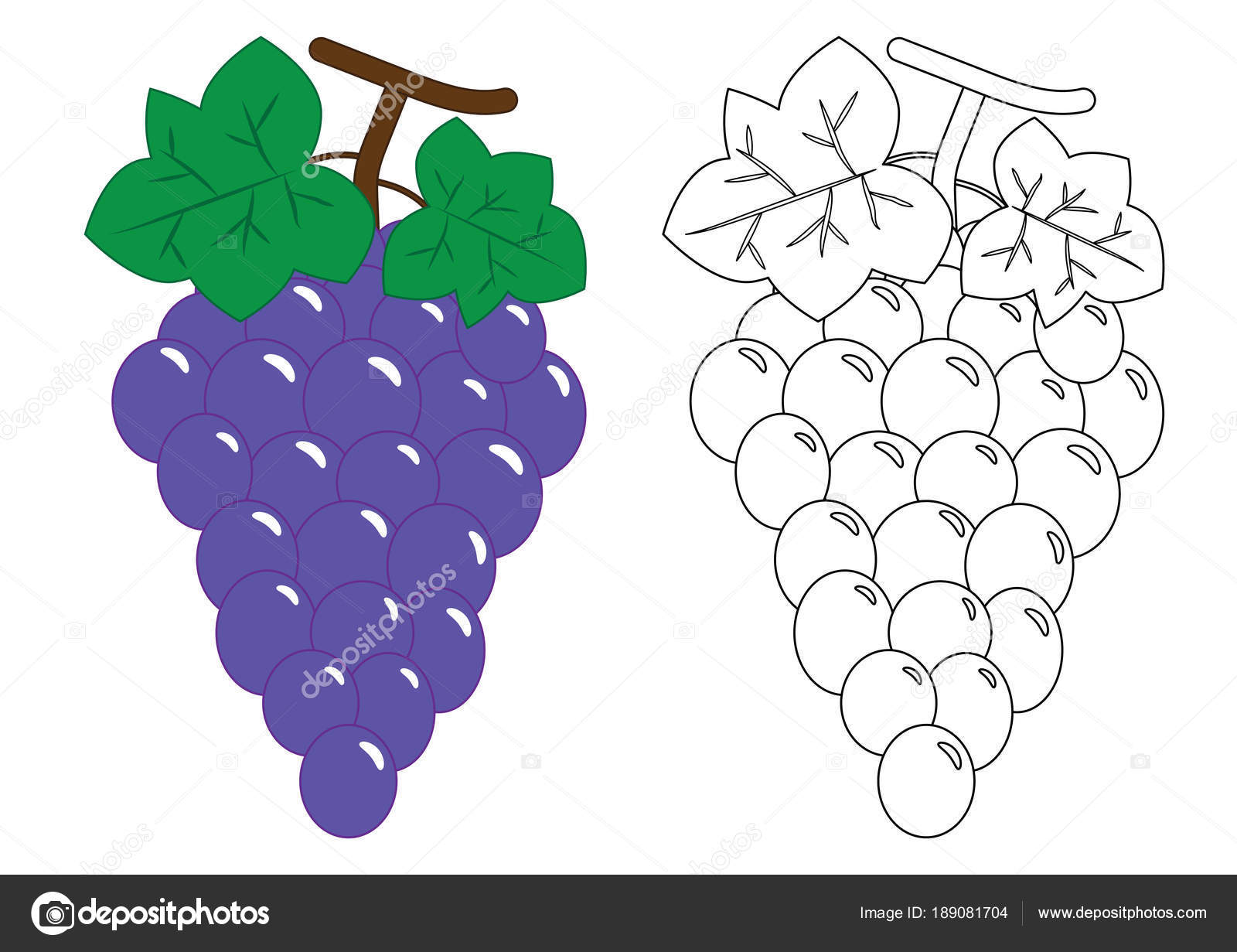 Grapes Activity For Preschool Children Coloring Book Stock