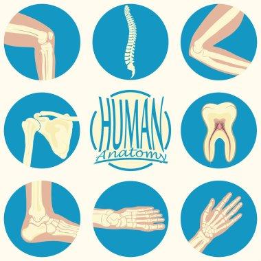 set of humane joints