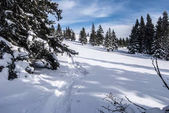 prato di montagna di inverno con neve e gli alberi isolati