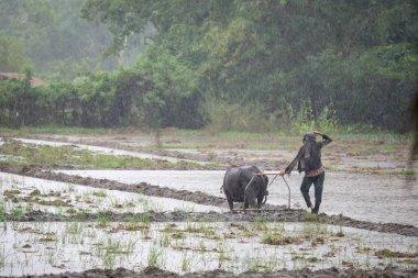 A farmer on a rainy day, Capas