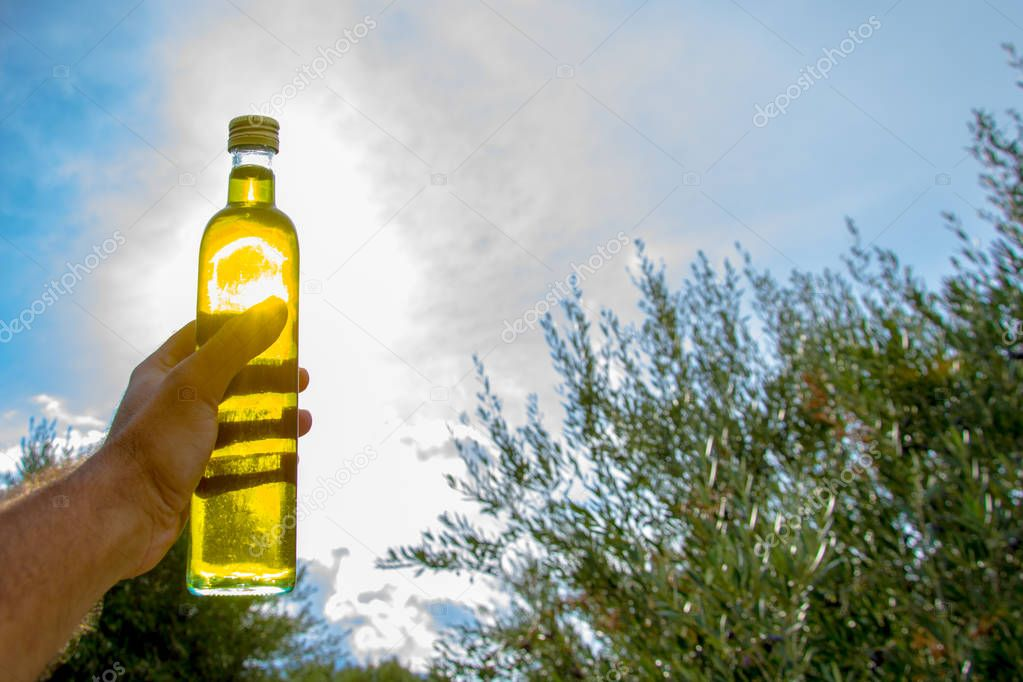Man keeps against sun a bottle of extra virgin olive oil in an olive tree field at Crete, Greece.