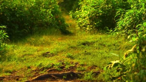 Motýl v lese na pozadí letní trávy