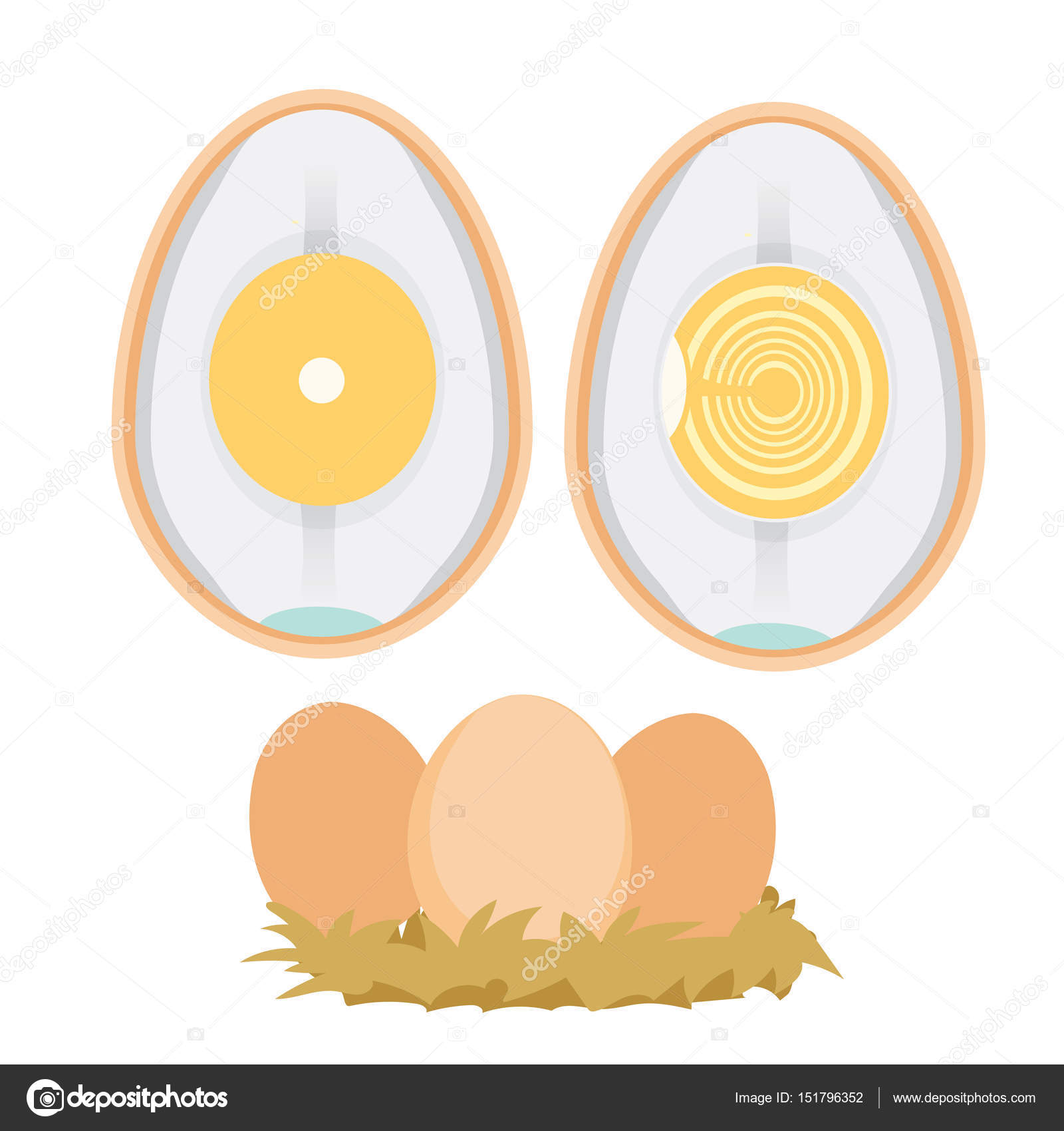 chicken egg life cycle — Stock Vector © pui2motif.gmail.com #151796352