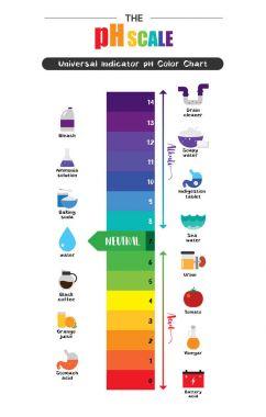 The pH scale Universal Indicator pH Color Chart diagram acidic alkaline values common substances vector illustration flat icon design Colorful clip art vector