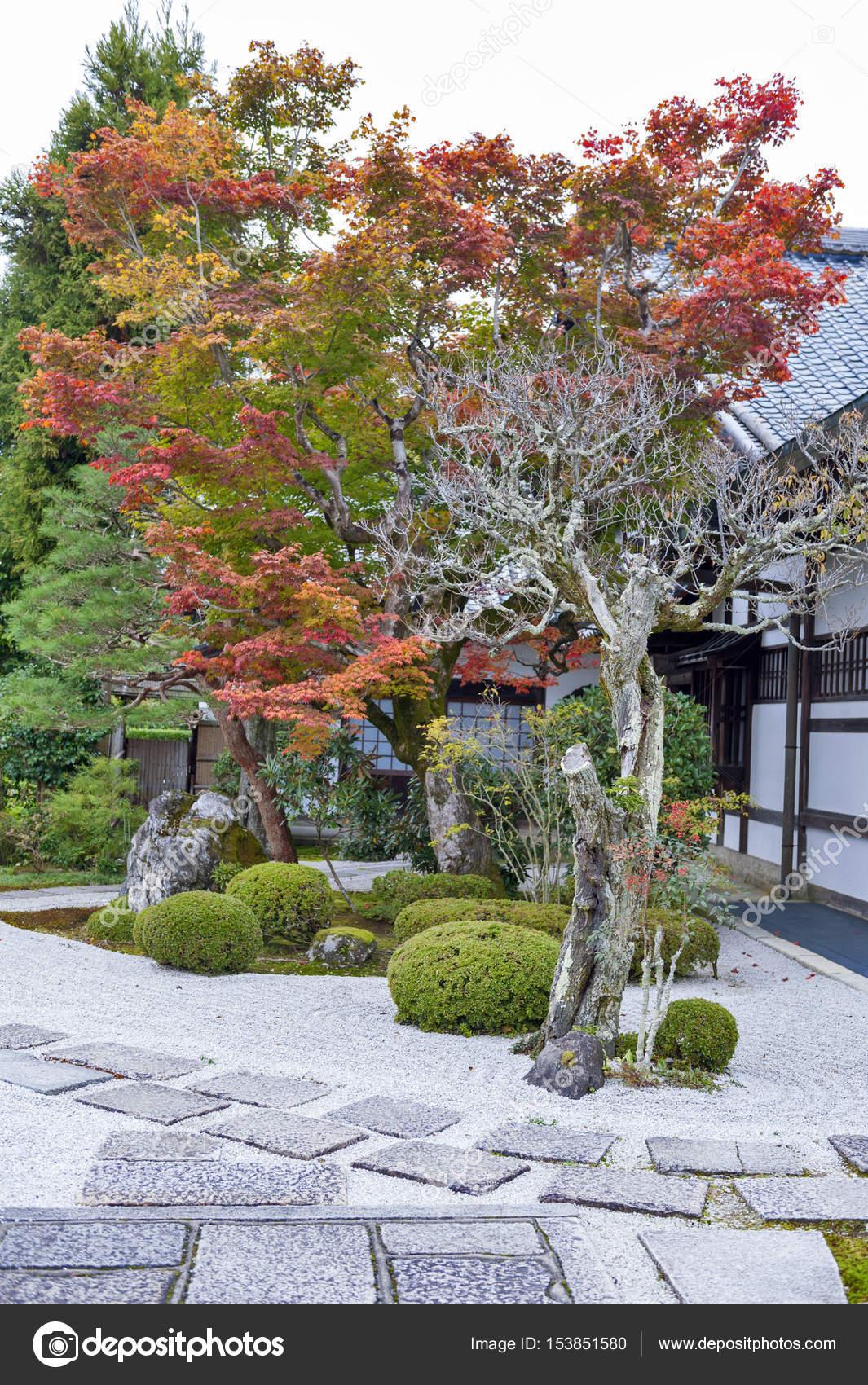 Albero Di Acero Rosso Giapponese Durante Lu0027autunno In Giardino Al Tempiale  Di Enkoji A Kyoto, Giappone U2014 Foto Di Jiggotravel
